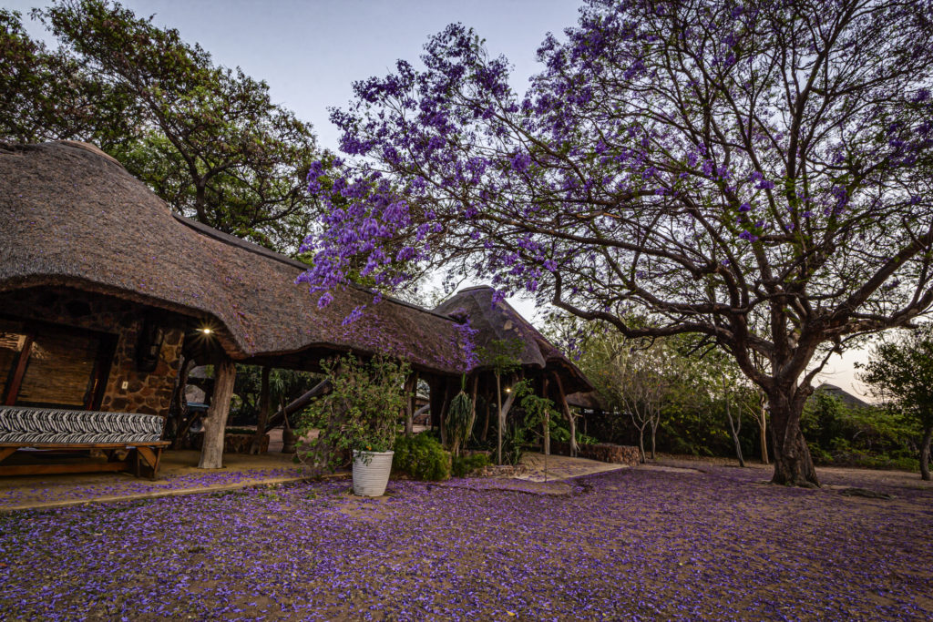 A picturesque lodge surrounded by lush trees and wildlife.